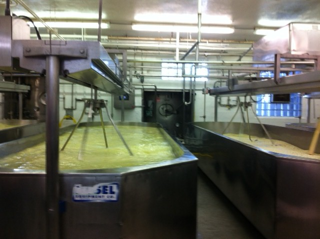Turning Milk into Curds at Chalet Cheese